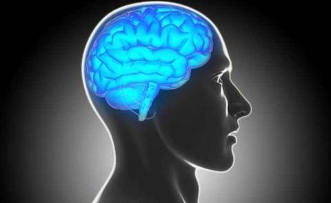 brain-representational-image-650_650x400_61425367376