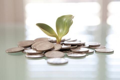 money-plant-from-flicker-e1414469875469