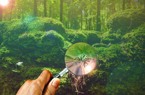 magnifying-glass-671858_1280-530x348